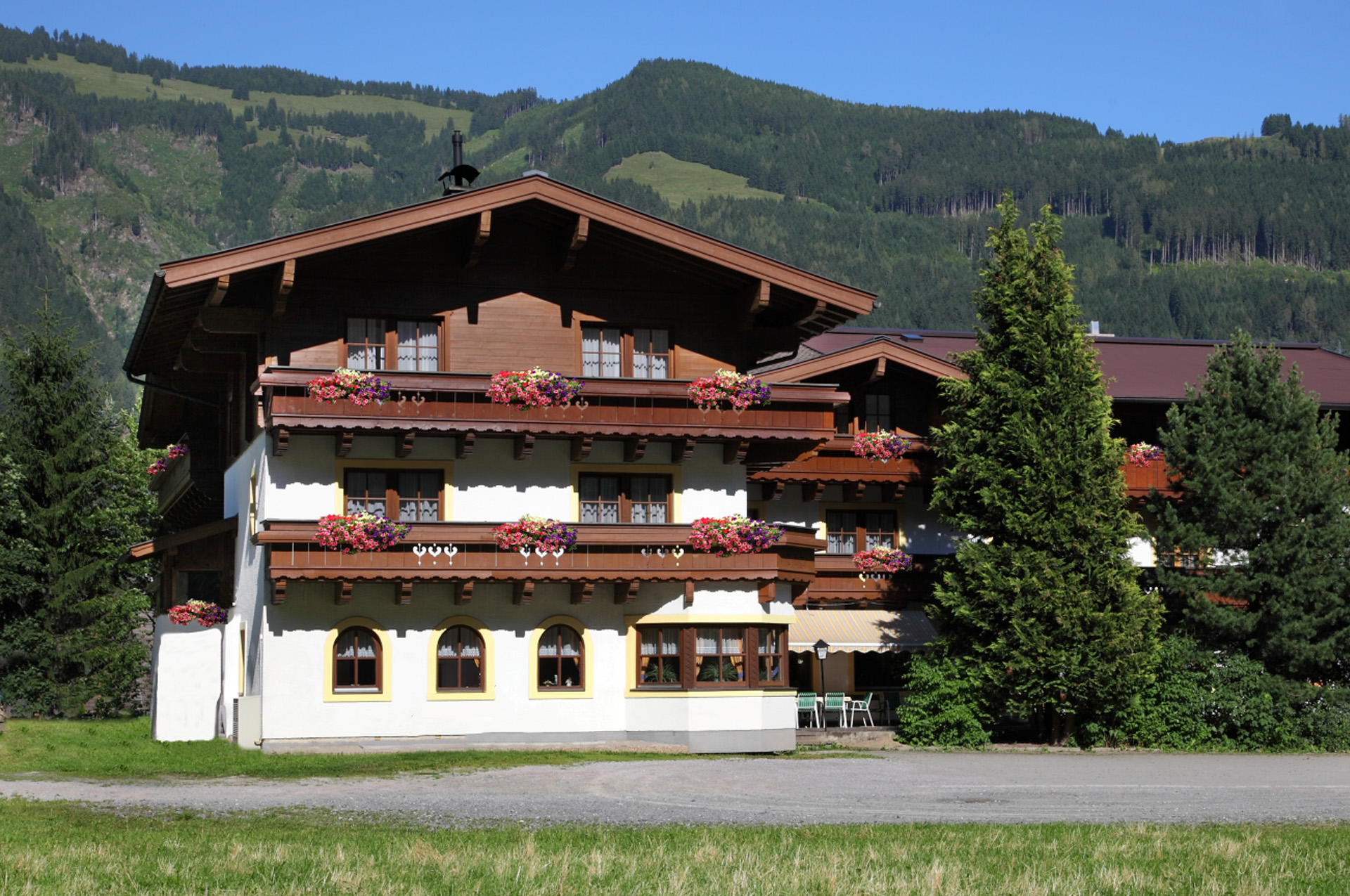 Header slide flowers | Pension Alpenrose - Maishofen